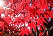 Екскурзия: Алената есен в Япония Токио - Йокохама – Камакура - Никко — Фуджи – Киото –  Нара